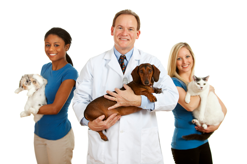 veterinarian jobs
