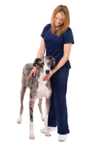 veterinary assistant arizona